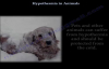 Hypothermia In Animals,different  Everything You Need To Know  Dr. Nabil Ebraheim
