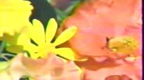 Sandi Patty and Larnelle Harris - More than Wonderful (1984).flv