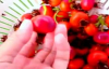 Harvesting Episode 24  Health Benefits of Rose Hips