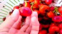 Harvesting Episode 24  Health Benefits of Rose Hips