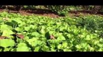 Gotu kola  Health Benefits of the Plants and Gotu Kola Supplement