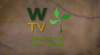 Plantain Herb  Plantain Health Benefits