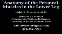Anatomy Of The Peroneal Muscles In The Lower Leg  Everything You Need To Know  Dr. Nabil Ebraheim