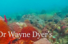 4 - Living Infinitely - Dr. Wayne W. Dyer's Change your thoughts, change your life, audio book.mp4