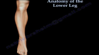 Anatomy Of The Lower Leg  Everything You Need To Know  Dr. Nabil Ebraheim