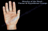 Muscles Of The Hand Thenar & Hypothenar Groups  Everything You Need To Know  Dr. Nabil Ebraheim