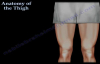 Anatomy Of The Thigh  Everything You Need To Know  Dr. Nabil Ebraheim