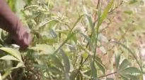 Kansiime Anne  Communal ownership of vegetables