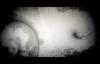 Shifting Shadows by David Diga Hernandez.3gp