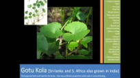 Gotu Kola benefitsHeres The Real Truth About Gotu Kola