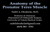 Anatomy Of The Pronator Teres Muscle  Everything You Need To Know  Dr. Nabil Ebraheim