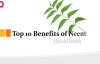 Top 10 Benefits of neem  Neem Benefits  Health