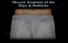 Muscle Anatomy Of The Hips & Buttocks  Everything You Need To Know  Dr. Nabil Ebraheim