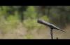 New Amharic Mezmur By Iyosiyas Sisay 2014- ተነስቷል.mp4