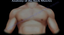 Muscle Anatomy Of The Neck  Everything You Need To Know  Dr. Nabil Ebraheim