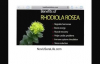 Powerful Adaptogenic Herb Rhodiola Rosea Health Benefits
