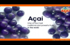 The Acai Berry  Superfood Health Benefits