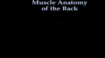 Muscle Anatomy Of The Trunk  Everything You Need To Know  Dr. Nabil Ebraheim
