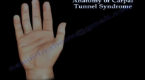 Anatomy of Carpal Tunnel Syndrome  Everything You Need To Know  Dr. Nabil Ebraheim