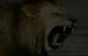 Charles Spurgeon Sermon  The Roaring Lion