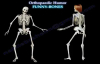 Funny Bones, Gangnam Parody Ortho Style  Dr. Nabil Ebraheim