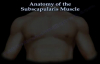 Anatomy Of The Subscapularis Muscle  Everything You Need To Know  Dr. Nabil Ebraheim