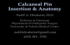 Calcaneal Pin Insertion Anatomy  Everything You Need To Know  Dr. Nabil Ebraheim