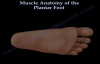 Muscle Anatomy Of The Plantar Foot  Everything You Need To Know  Dr. Nabil Ebraheim