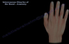 Interosseous Muscles Of The Hand Anatomy  Everything You Need To Know  Dr. Nabil Ebraheim