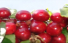 Cherries health benefits. Healthy life