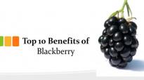 Top 10 Benefits of Blackberry  Blackberry Health Benefits