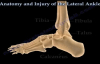 Anatomy and injuries of The Lateral Ankle  Everything You Need To Know  Dr. Nabil Ebraheim