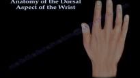Anatomy Of The Dorsal Aspect Of The Wrist  Everything You Need To Know  Dr. Nabil Ebraheim