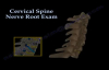 Cervical Spine Nerve Root Exam  Everything You Need To Know  Dr. Nabil Ebraheim