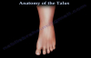 Anatomy Of The Talus  Everything You Need To Know  Dr. Nabil Ebraheim