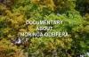 Moringa Oleifera  Documentary about Moringa Superfood