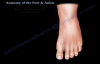 Anatomy Of The Foot & Ankle  Everything You Need To Know  Dr. Nabil Ebraheim