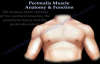 Pectoralis Muscle Anatomy & Function  Everything You Need To Know  Dr. Nabil Ebraheim
