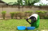 I love you Honey by Kansiime Anne - African Comedy.mp4