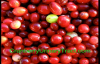 Cranberry & Urinary Tract health info you must know