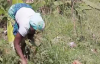Communal ownership of vegetables. Kansiime Anne. African comedy.mp4