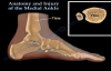 Anatomy and injuries of The Medial Ankle  Everything You Need To Know  Dr. Nabil Ebraheim