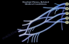 Brachial Plexus, Related Medical Conditions  Everything You Need To Know  Dr. Nabil Ebraheim