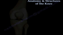 Anatomy & Structure Of The Knee , knee pain  Everything You Need To Know  Dr. Nabil Ebraheim