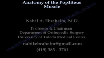 Anatomy Of The Popliteus Muscle  Everything You Need To Know  Dr. Nabil Ebraheim