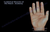 Lumbrical Muscles Of The Hand Anatomy  Everything You Need To Know  Dr. Nabil Ebraheim