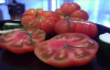 Tomato benefits properties. Medical study tomato consumption. Tomato lycopene