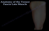Anatomy of the Tensor Fascia Lata Muscle  Everything You Need To Know  Dr. Nabil Ebraheim