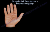 Scaphoid Fractures Blood Supply  Everything You Need To Know  Dr. Nabil Ebraheim
