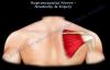 Suprascapular Nerve Anatomy & Injury  Everything You Need To Know  Dr. Nabil Ebraheim